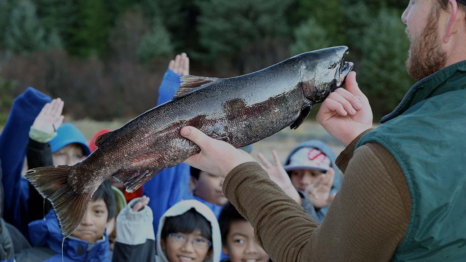 ELCMP-salmon-tank-egg-take_Buckhorn