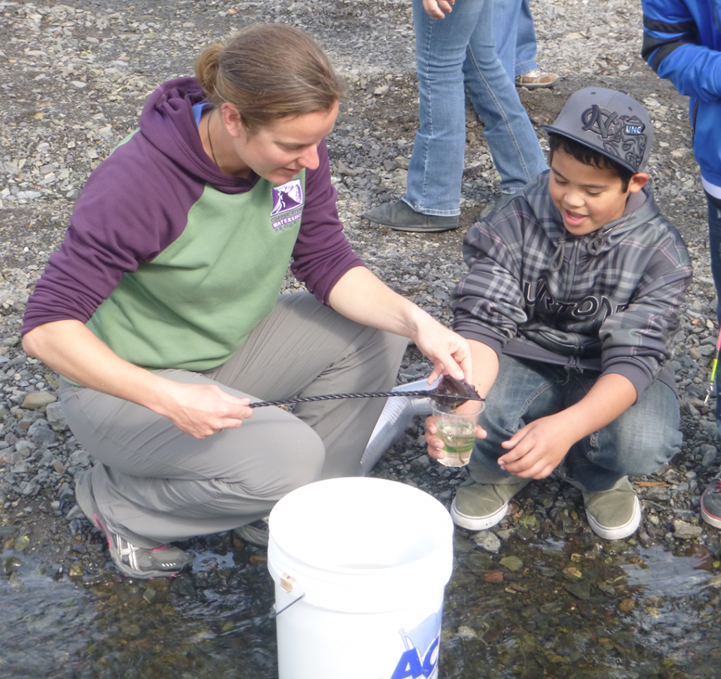 Kate Morse of the Copper  River Watershed Project distributed a cup with 10-15 fry to each student.