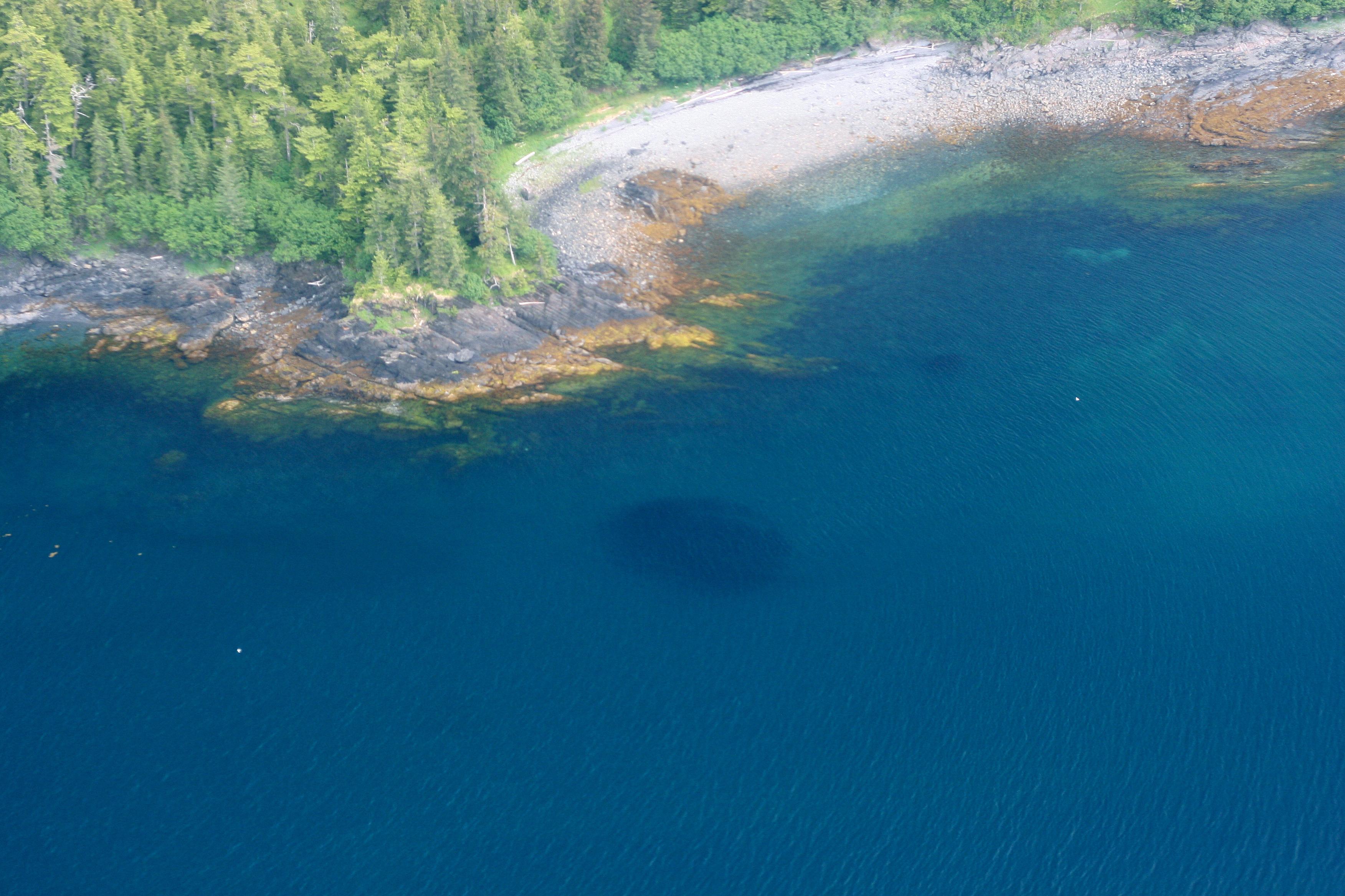 Aerial view of herring school