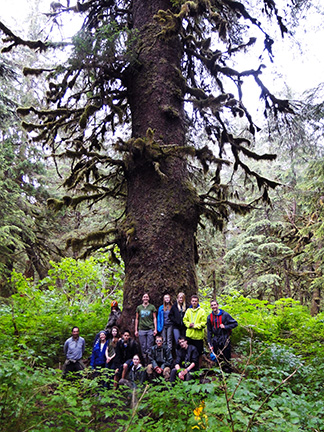 Participants pause to admire the giant old growth trees of Cordova's coastal temperate rainforest.