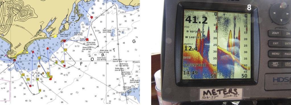 herring on the sonar