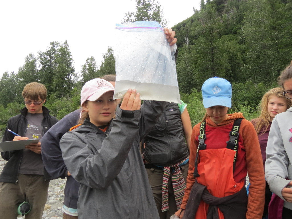 Students identify a Dolly Varden trout, caught using a minnow trap in an unnamed stream north of Baird Canyon. Photo credit: Lauren Bien