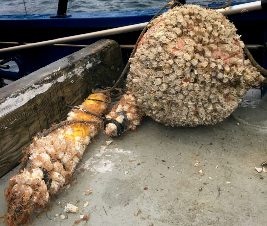 Buoy, acoustic receiver and acoustic release with biofouling.