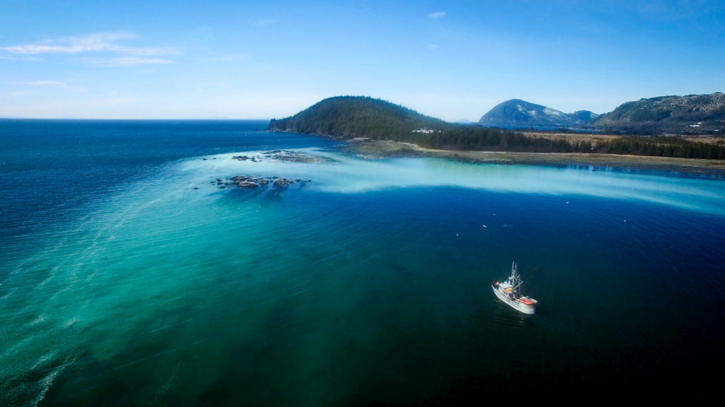 Prince William Sound Pacific herring spawn event